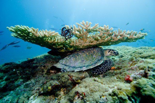 Vacances balnéaires aux Maldives : profiter d'un séjour de plongée